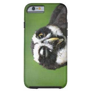 Spectacled Owl (Pulsatrix perspicillata) Tough iPhone 6 Case