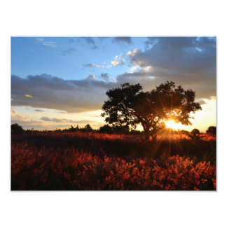 Spectacular African Sunset Photographic Print