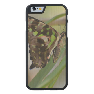 Spectacular Butterfly Carved® Maple iPhone 6 Case