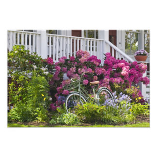 Spectacular spring bloom, whimsical antique photo
