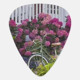 Spectacular spring bloom, whimsical antique plectrum