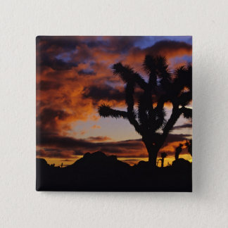 Spectacular Sunrise at Joshua Tree National 15 Cm Square Badge