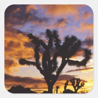 Spectacular Sunrise at Joshua Tree National Park Square Sticker