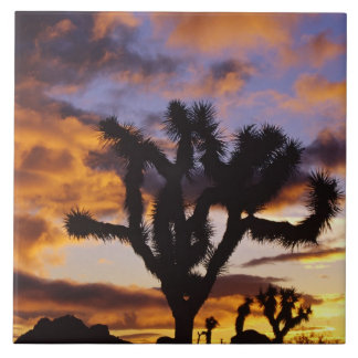 Spectacular Sunrise at Joshua Tree National Park Tile