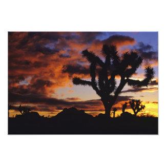 Spectacular Sunrise at Joshua Tree National Photo Print
