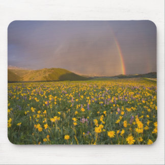 Spectacular wildflower meadow at sunrise in the 2 mouse mat