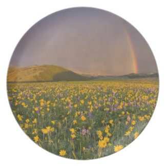 Spectacular wildflower meadow at sunrise in the 2 plate