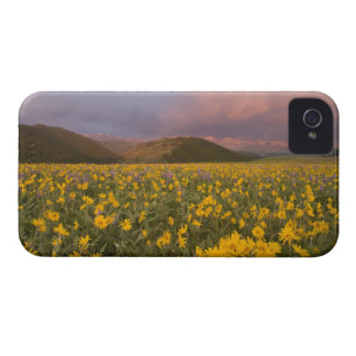 Spectacular wildflower meadow at sunrise in the Case-Mate iPhone 4 case