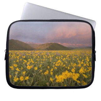 Spectacular wildflower meadow at sunrise in the computer sleeve