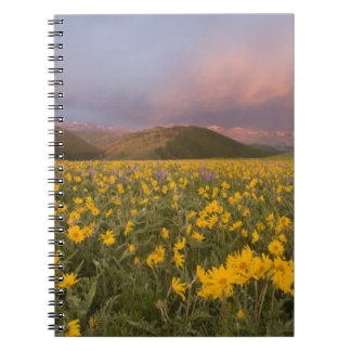 Spectacular wildflower meadow at sunrise in the notebook