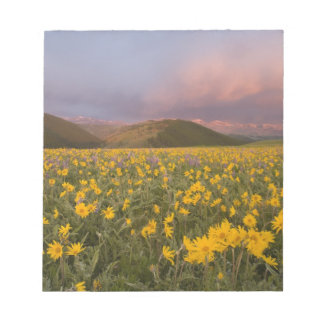 Spectacular wildflower meadow at sunrise in the notepad