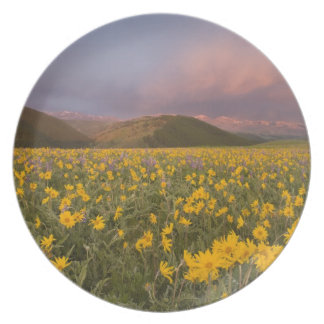 Spectacular wildflower meadow at sunrise in the party plate