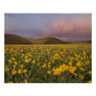 Spectacular wildflower meadow at sunrise in the poster