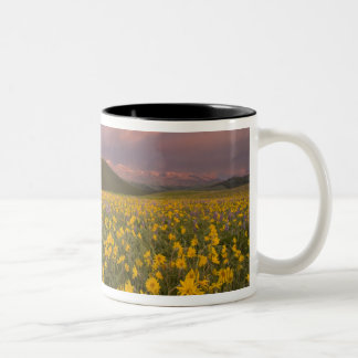 Spectacular wildflower meadow at sunrise in the Two-Tone coffee mug