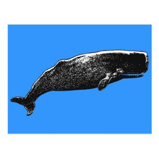Sperm Whale Postcard