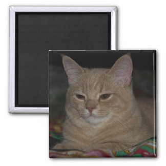 sphinxe square magnet