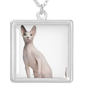 Sphynx (13 months old) silver plated necklace