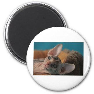 Sphynx 6 Cm Round Magnet