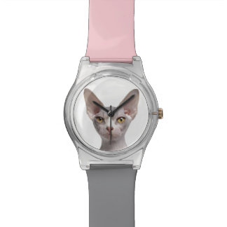 Sphynx (7 months old) watch