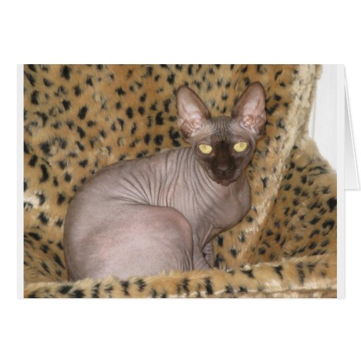 Sphynx Article Greeting Card