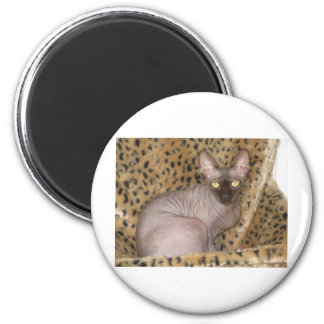 Sphynx Article Magnet