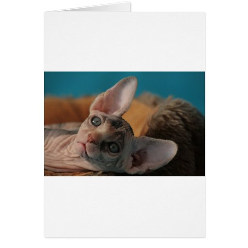 Sphynx Cards