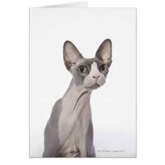 Sphynx Cat with surprised expression Card
