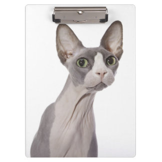 Sphynx Cat with surprised expression Clipboard