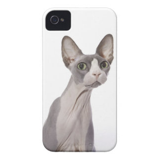 Sphynx Cat with surprised expression iPhone 4 Case-Mate Cases