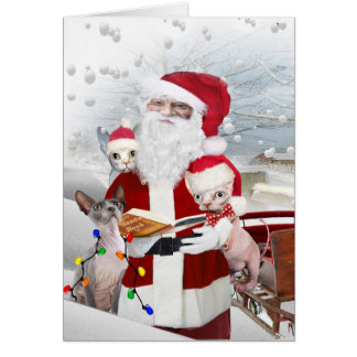 Sphynx Kitten's A Look At Santa's Book Card