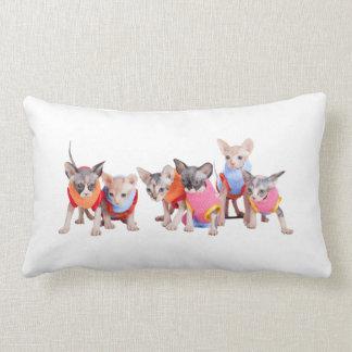 Sphynx Kittens Pillow | GoSphynx.com
