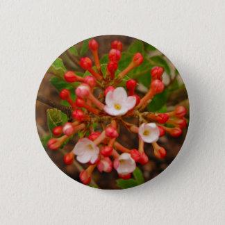 Spice Bush in Spring, Button
