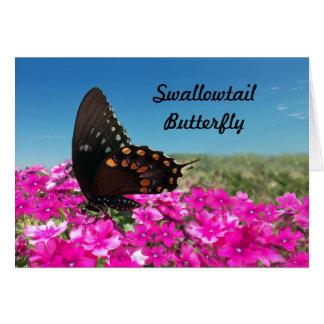 Spicebush Swallowtail Butterfly Card