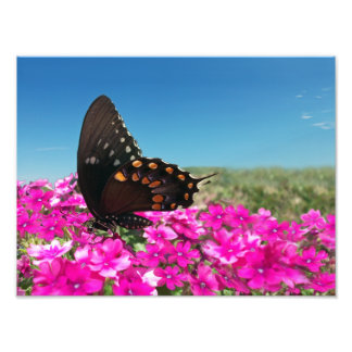 Spicebush Swallowtail Butterfly Photographic Print