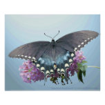 Spicebush Swallowtail Photo Poster