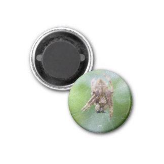 Spider #3 3 cm round magnet