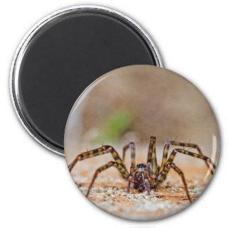spider a 6 cm round magnet