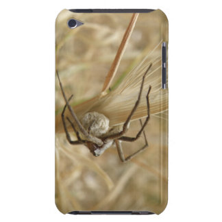 Spider and Egg Sac iPod Case iPod Touch Cases