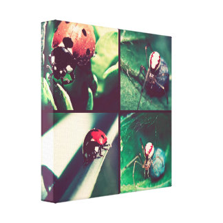 Spider and ladybugs canvas print