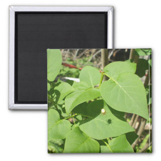 Spider and Web on Leaves. Square Magnet