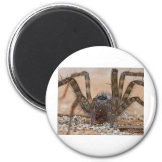 spider b 6 cm round magnet