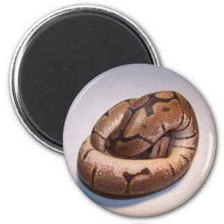 Spider Ball Python Magnet