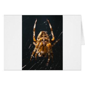 Spider Card