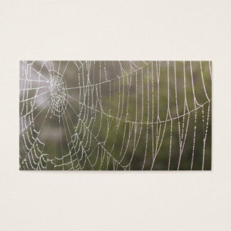 Spider Cobweb Business Card