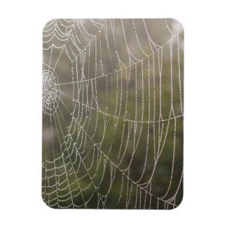 Spider Cobweb Magnets