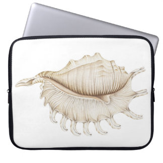 Spider Conch Sea Shell Pencil Laptop Sleeve