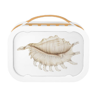 Spider Conch Shell in Colour Pencil Yubo Lunchbox