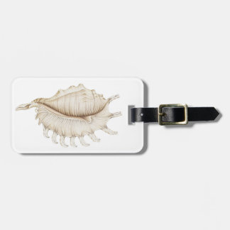 Spider Conch Shell in Coloured Pencil Luggage Tag