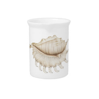 Spider Conch Shell in Coloured Pencil Pitcher Jug