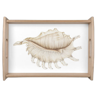 Spider Conch Shell in Coloured Pencil Serving Tray